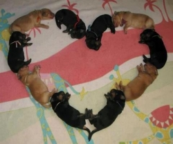 Funny photos - Dogs Heart