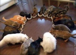 Animal photos - Circle Cat