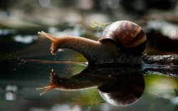 Animal photos - A praying mantis riding a snail.