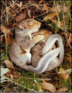 Animal photos - Cute Cuddling Squirrels