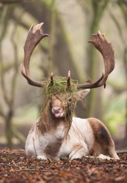 Animal photos - Derp deer