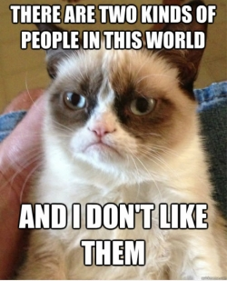 Funny photos - Grumpy cat is grumping again.