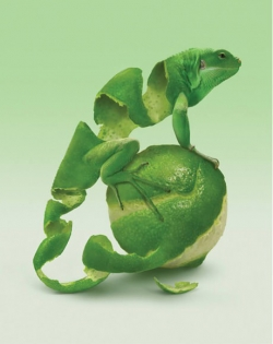 3D and Digital art Wallpaper - Lime Lizard