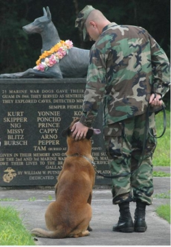 Animal photos - Some heroes have four paws