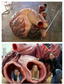 Miscellaneous pictures - The actual size of a blue whale heart