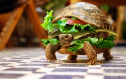 Funny Wallpaper - Cheeseburger funny wallpaper