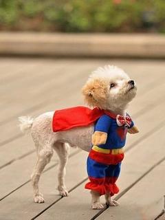 Super Man New
