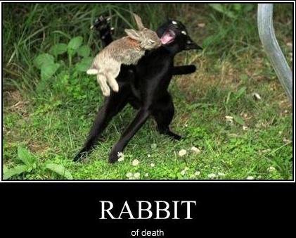 Rabbit of death
