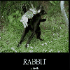 Funny photos - Rabbit of death