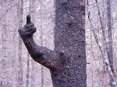Tree giving the finger