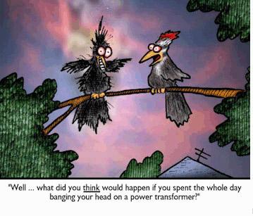 Bird banging head