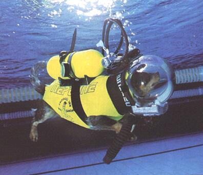 Dog - diver