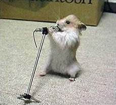 Animal photos - Rat singer