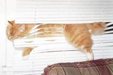 Stucked cat