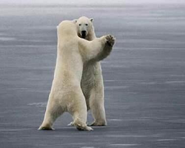 The white bear's dance