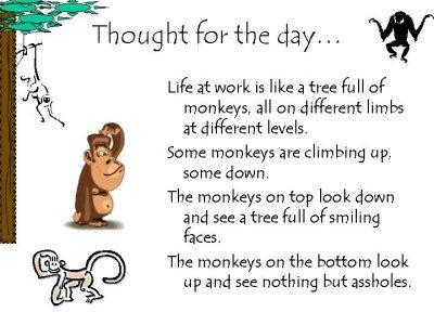 Monkey thought for the day