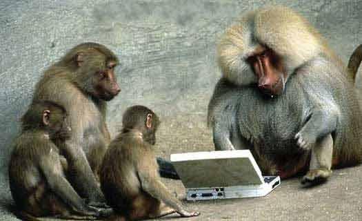 Monkey learns IT