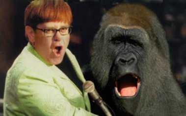 Elton John's new song