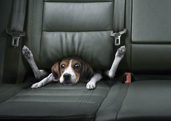 Stuck in car