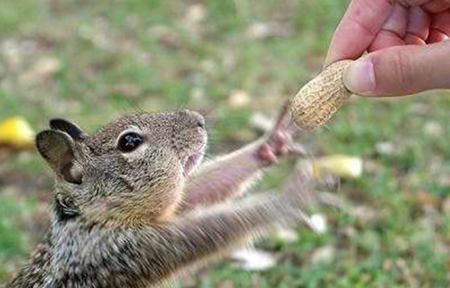 Stupid cute little animal.