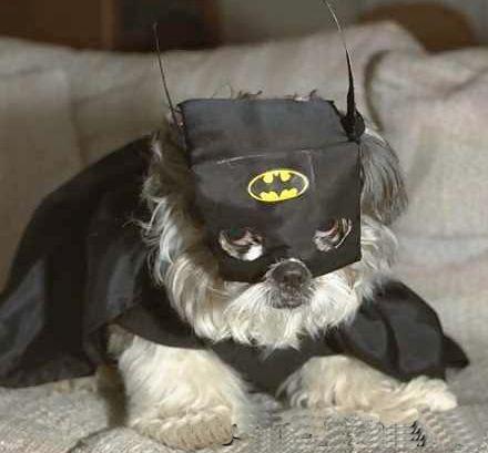 Batman's fan
