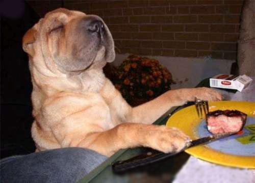 Dog prays