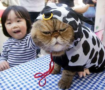 Cat in a cow suit