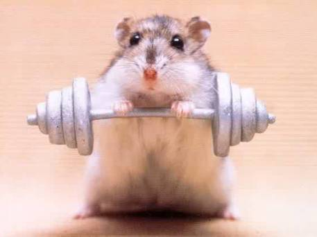 Strong mouse