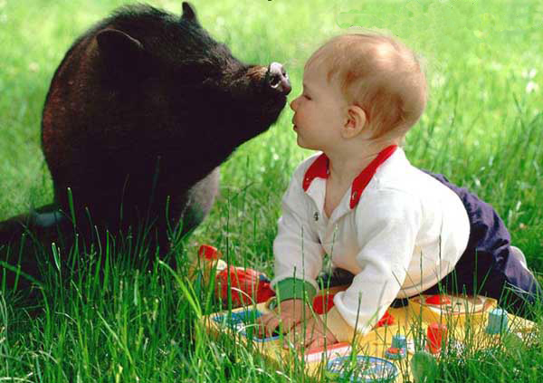 Baby and pig