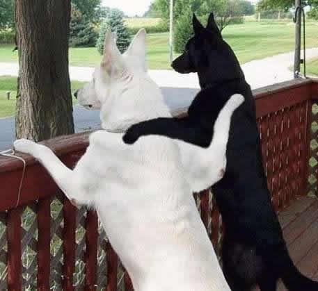Dog's friendship