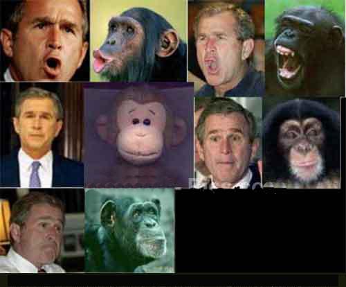 Bush - Ape