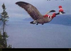 Animal photos - Prevent bird flu