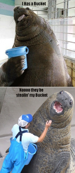 Animal photos - Seal's bucket