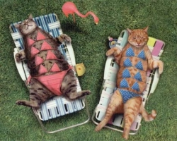 Animal photos - Tanning cat