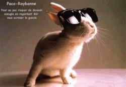 Animal photos - Raybane ads