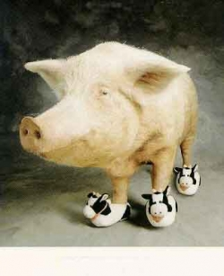 Funny photos - Moo shoe pork