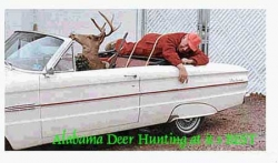 Funny photos - Alabama deer