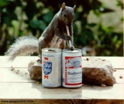 Animal photos - Thanks God for this beer!