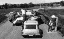 Funny photos - The big cat attack car