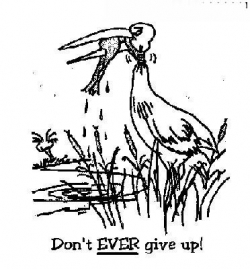 Funny photos - Don't ever give up