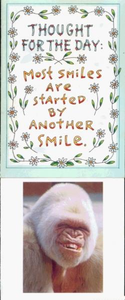 Animal photos - Smiles