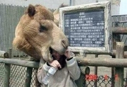 Funny photos - Beware of the camel