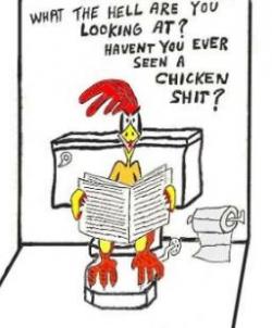 Funny photos - Chicken shit