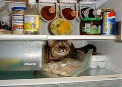 Funny photos - Cold pussy cat