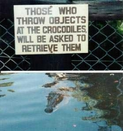 Funny photos - The crocodiles