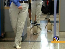 Funny photos - Penguin securty