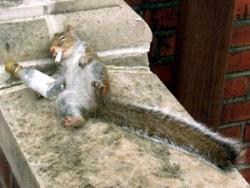 Animal photos - Drunk squirrel