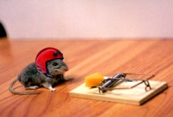 Animal photos - Stunt mouse