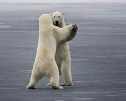 Funny photos - The white bear's dance