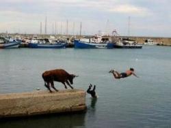 Funny photos - Escape gayal